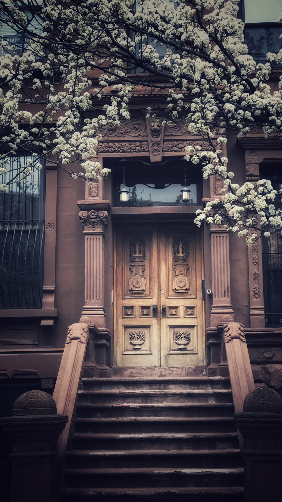 Harlem | NYC | Walking allowed me to see the evidence of 'spring has sprung'