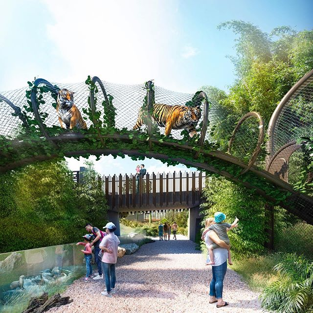 Tigers above you on raised bridges and orangutans swinging across 23-metre high climbing structures. These are just some of the things that visitors can expect to see in the Southeast Asia Jungle Track development at @aucklandzoo. We are thrilled to be part of the team working on this innovative project, and we're looking forward to seeing the animals and public enjoying being immersed in these incredible new habitats when they open in phases from early next year. #ignitearchitects #Ignite #auckland #newzealand #aucklandzoo #animals #track #project #development #public #innovation #amazing #tiger #crocodile #orangutans #southeastasia #jungle #zoo