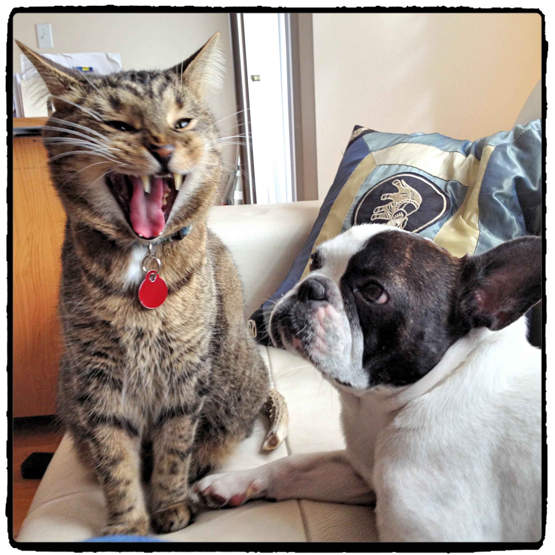Tiger & Beau