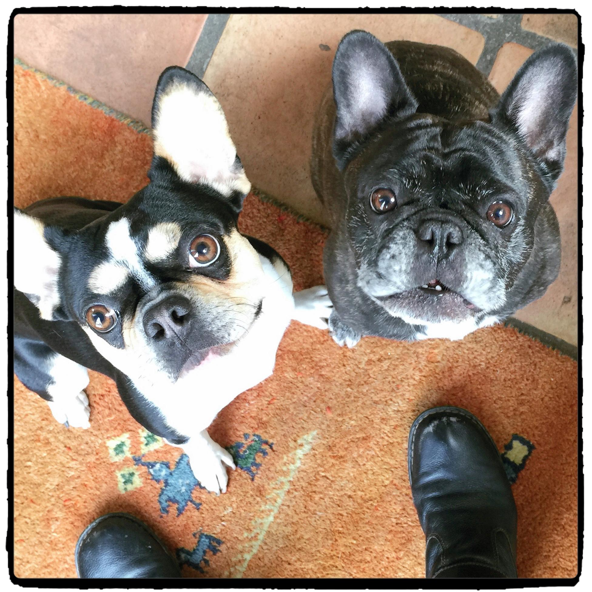 Oliver & Benny