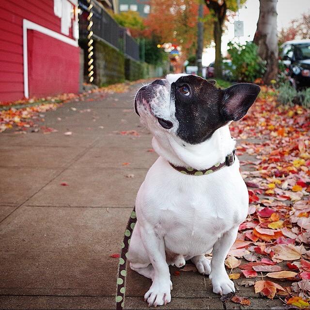 Autumn Beau