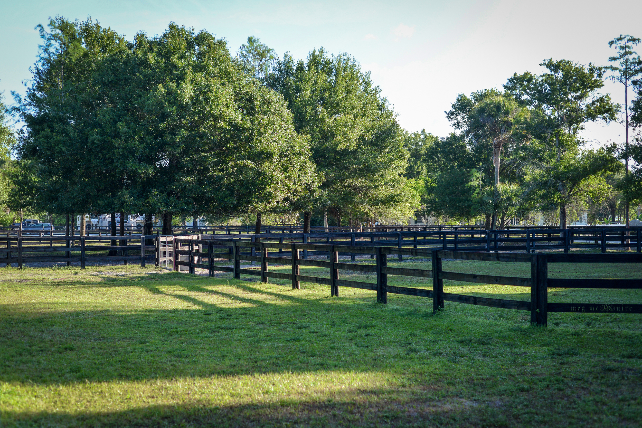 Our beautiful, shaded grass paddocks