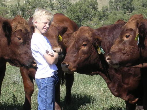 Our son David with two-year-old bulls in 2004