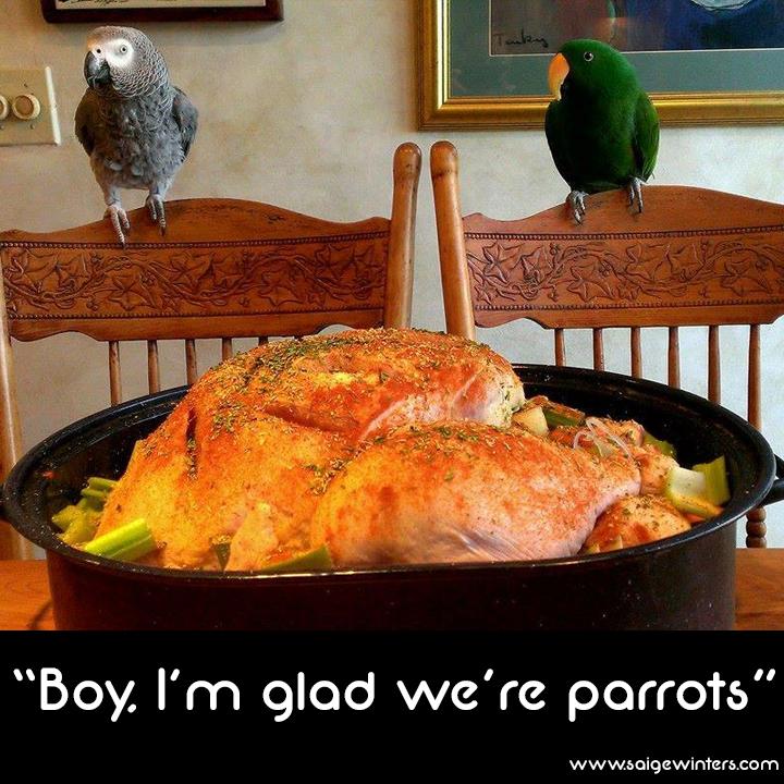 parrot thanksgiving.jpg