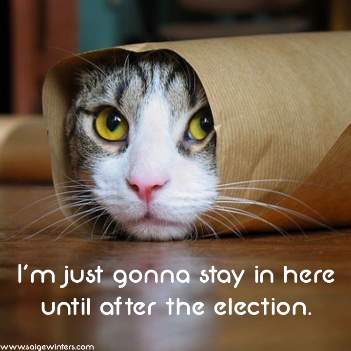 election cat.jpg