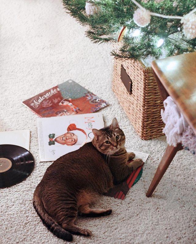 Hi friends! 👋🏼 Hope you had a meowy Christmas 😽🎄❤️