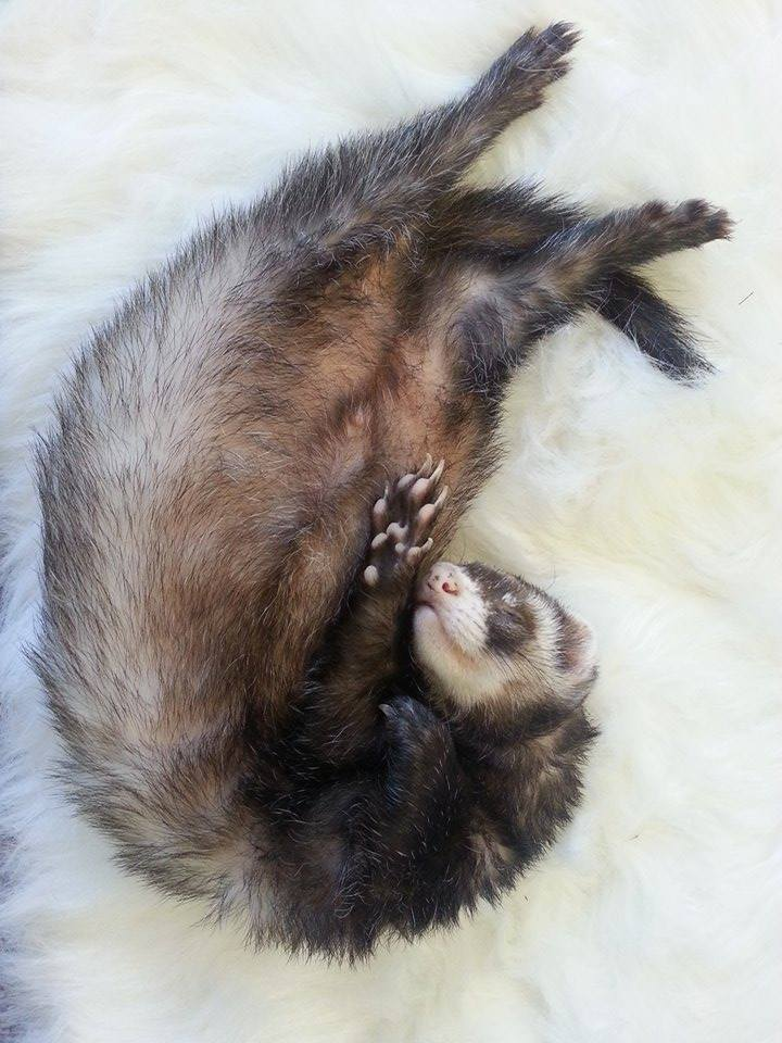 Kokanee didn't workout a lot, but he knew how to sleep deeply!