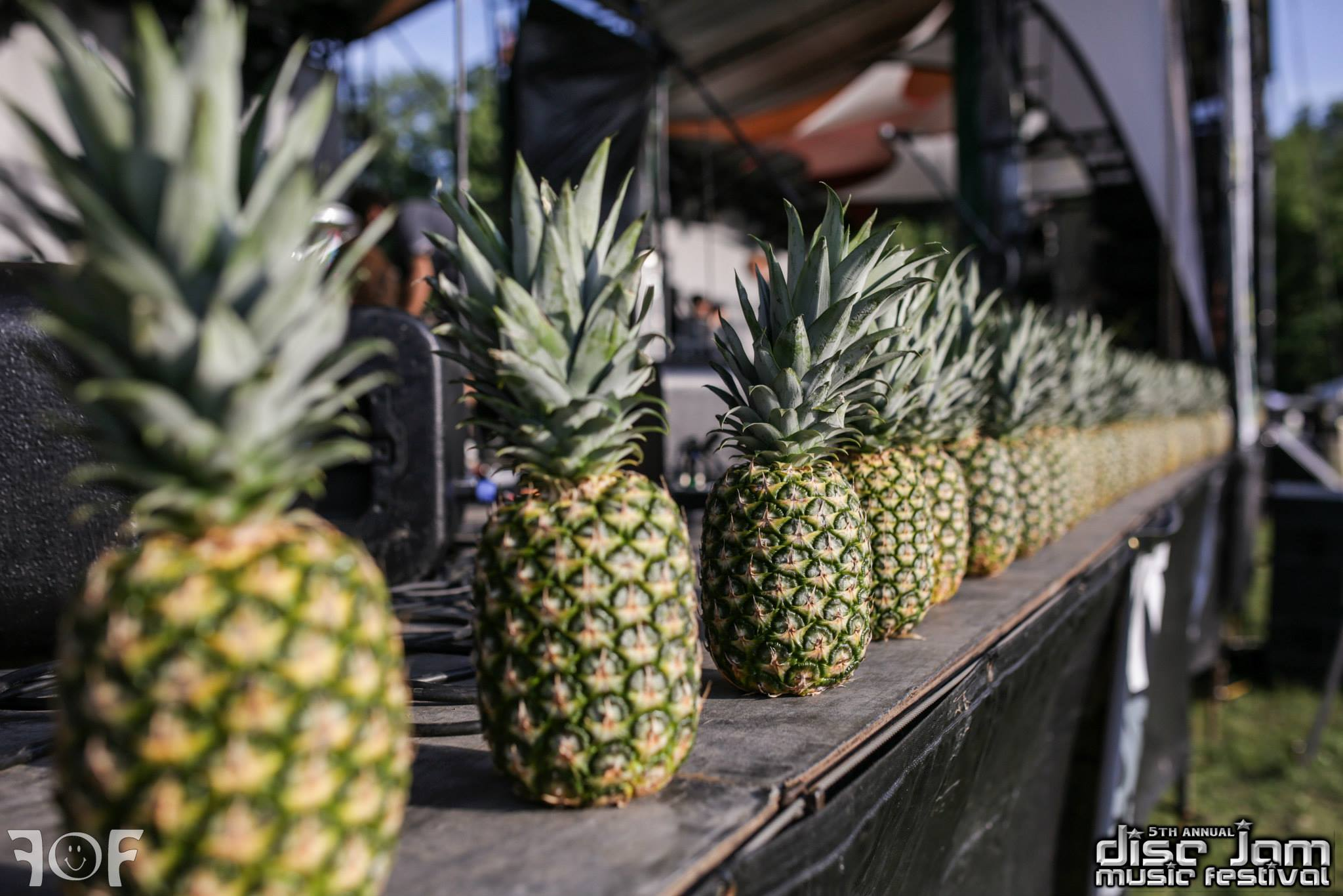 Pineapples fo' daysss   Source: Faces of Festivals and Disc Jam