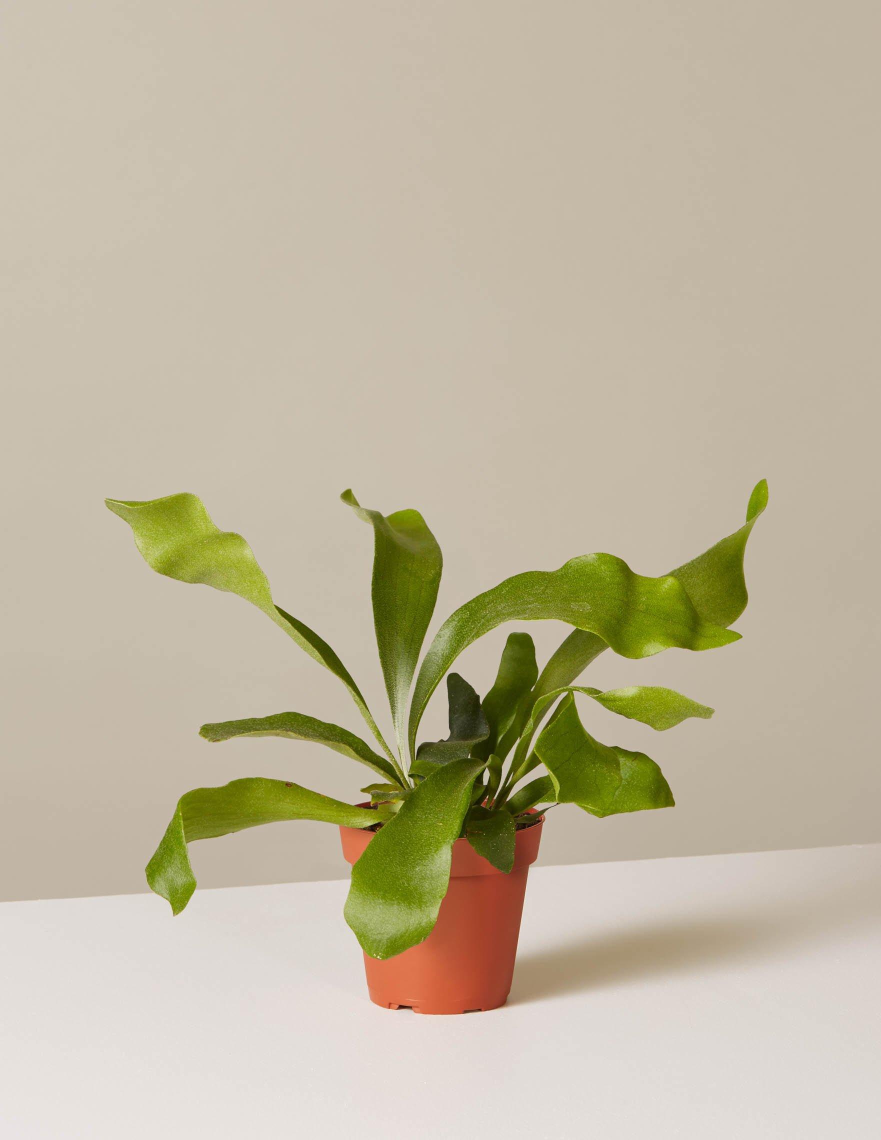 valentinesgiftyourselfplant.jpg