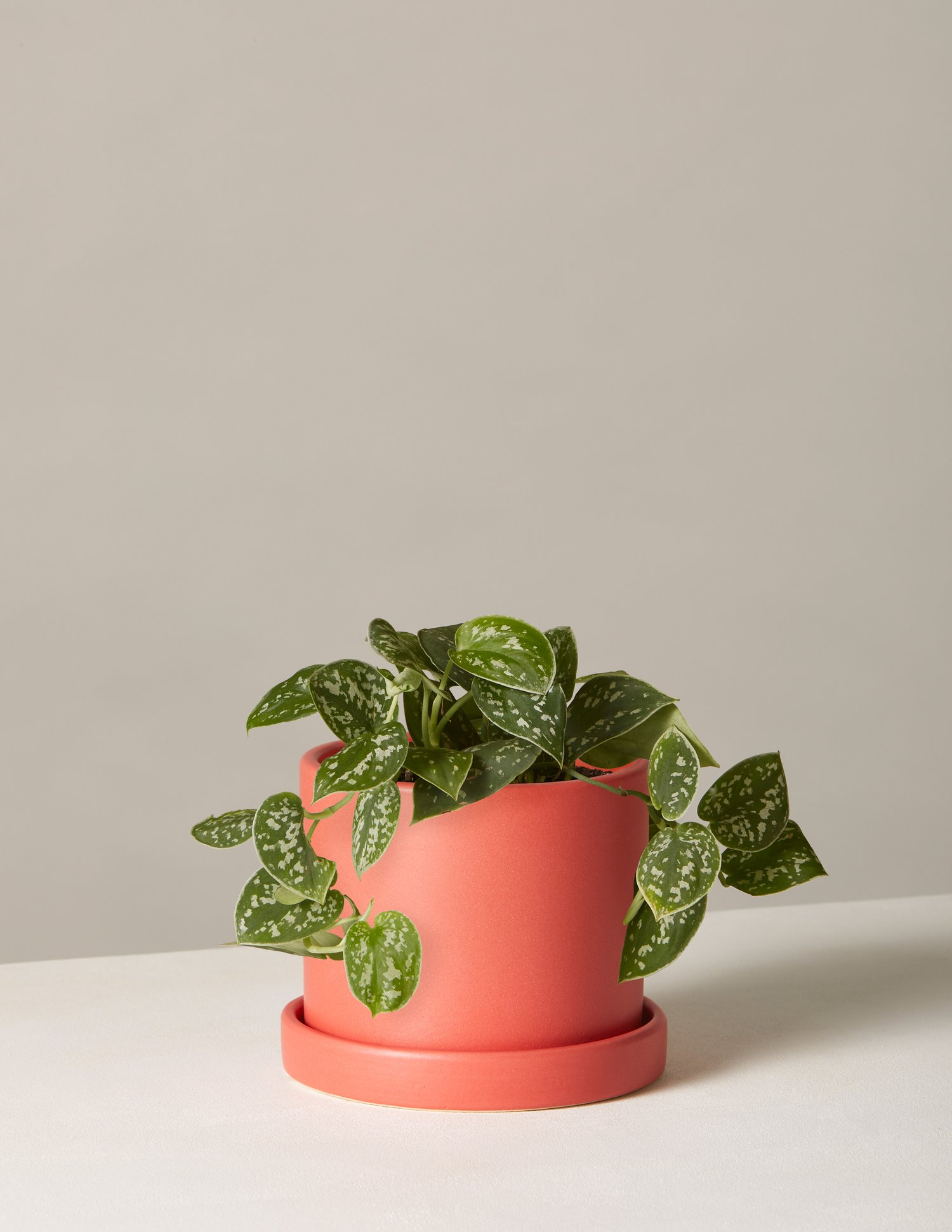 valentinesgiftyourselfplant2.jpg