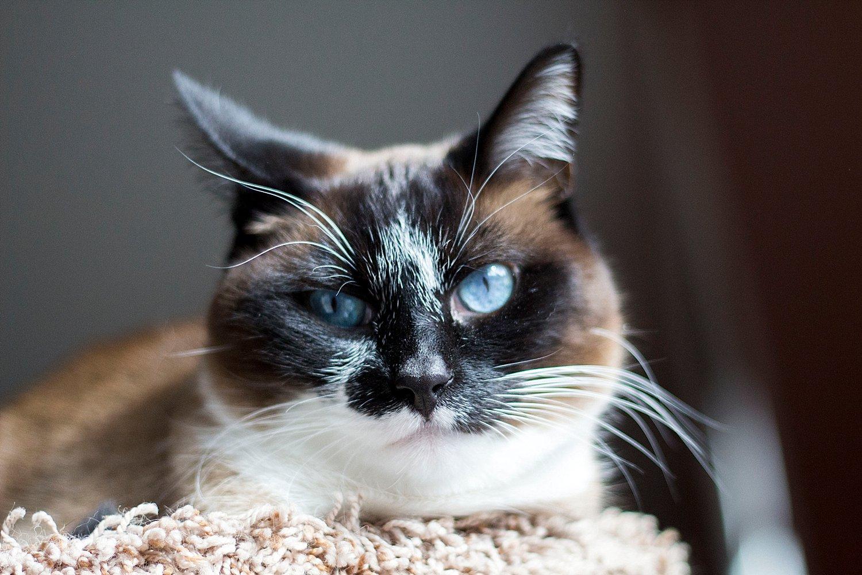 Sabrina Reis Photography | Minneapolis Pet Photography_0008.jpg