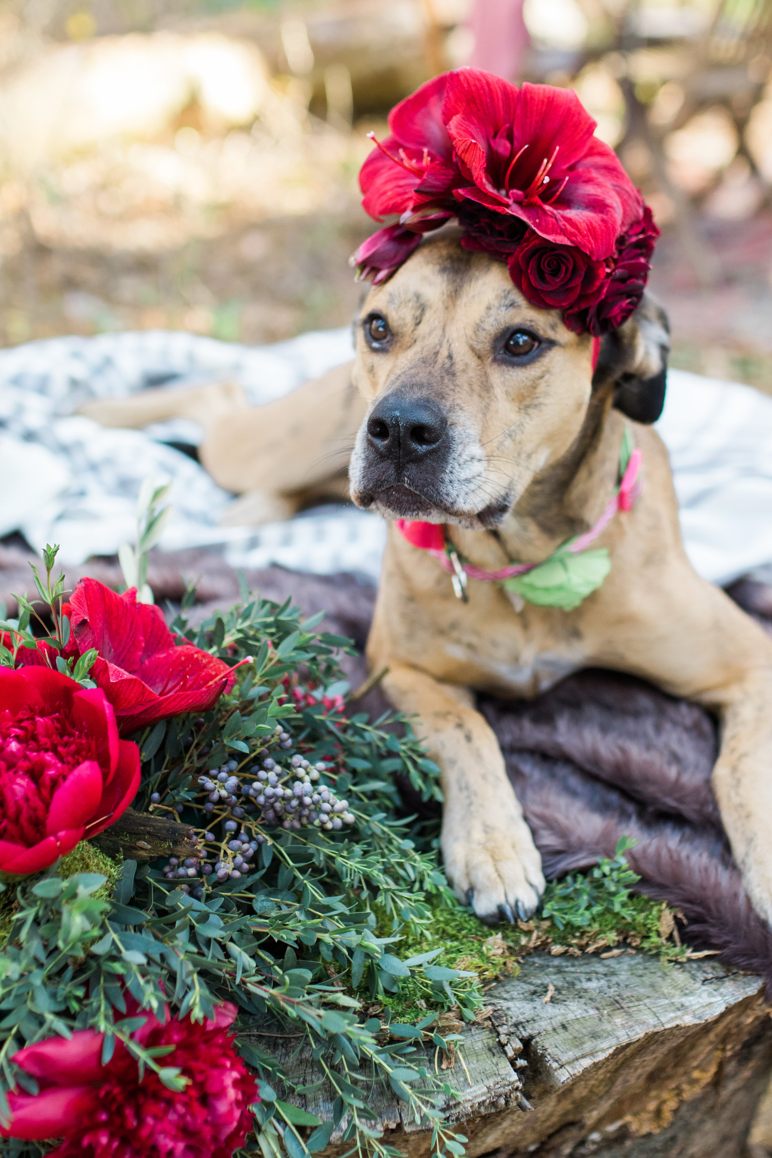 Sabrina Reis Photography - Sullvan's Birthday Soiree - Minneapolis-3.jpg
