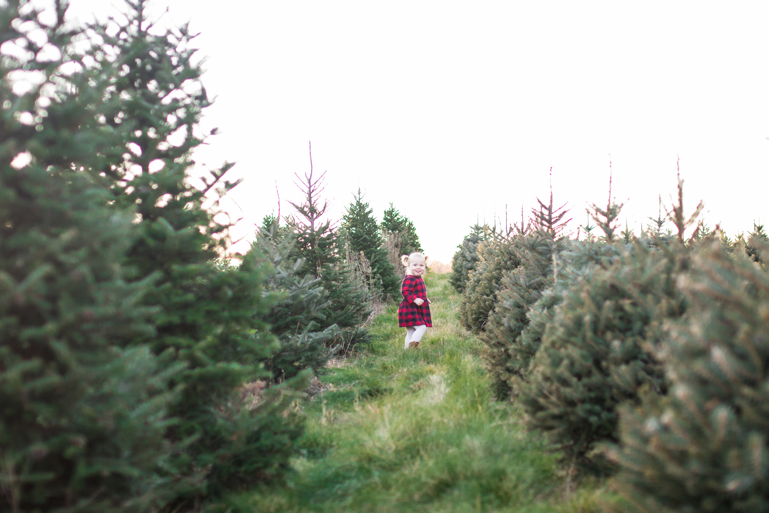 Bussler Mini Session - Hansen Tree Farm -Sabrina Reis Photography - Minneapolis -37.jpg