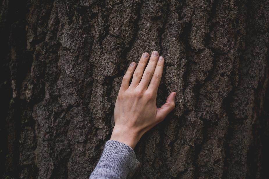 hand-on-tree-bark_925x.jpg