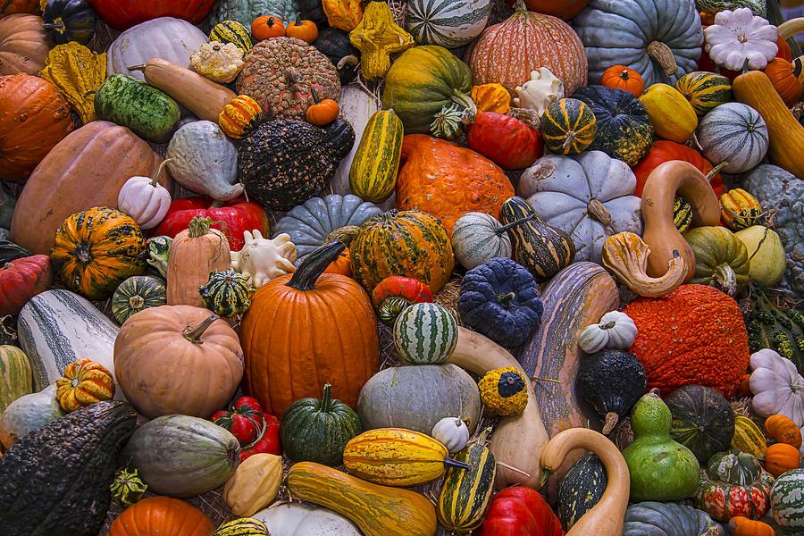 beautiful-autumn-harvest-garry-gay.jpg