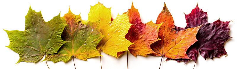 leafwatch-leaves.jpg