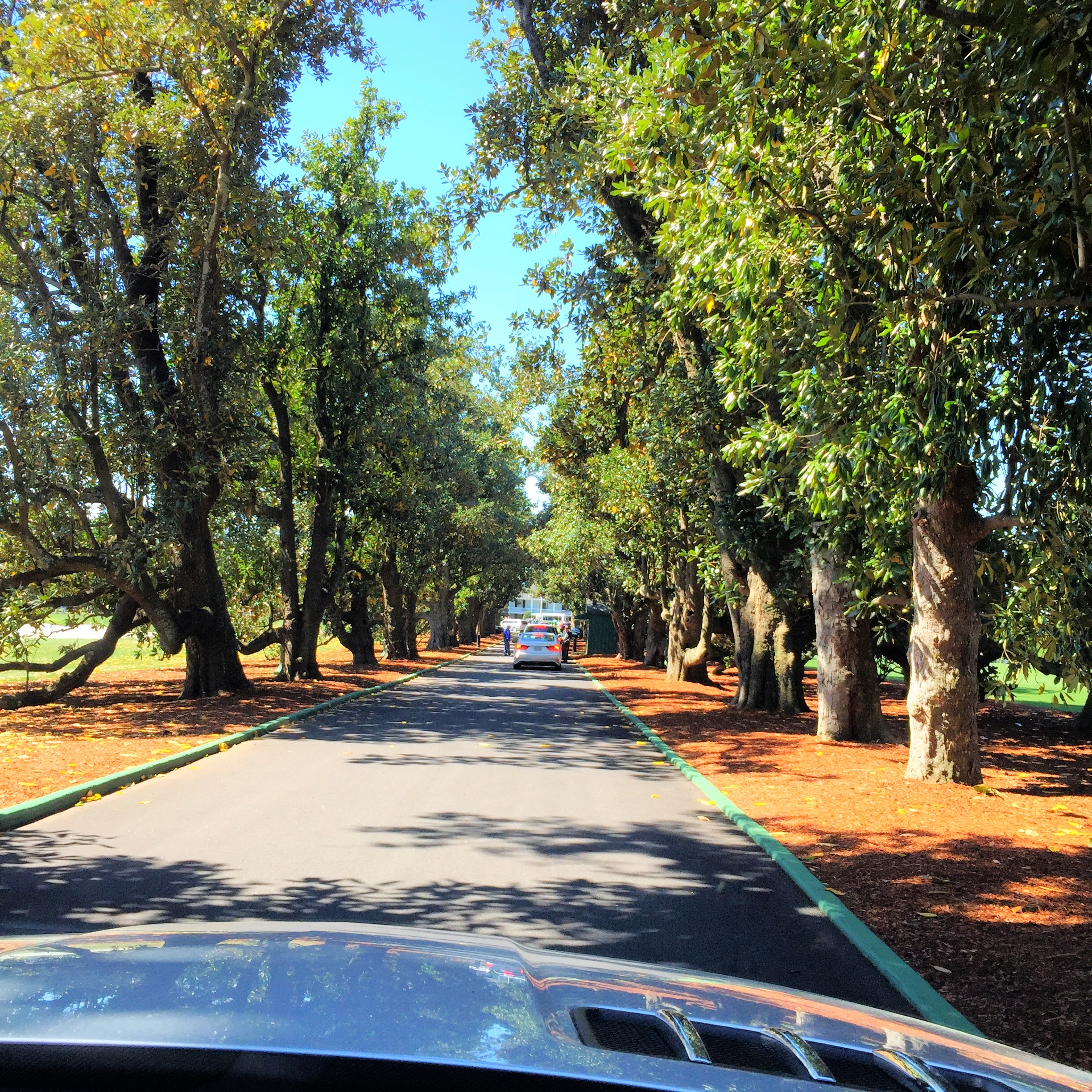 Driving down Magnolia Lane.
