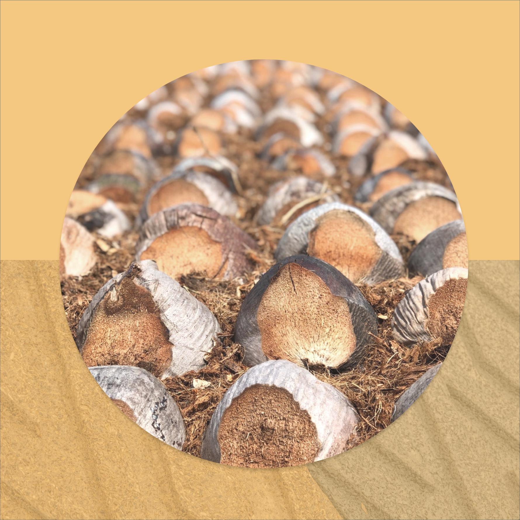 altum-wood.png