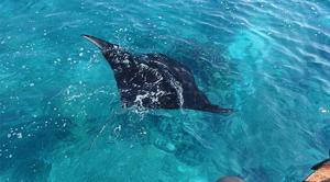 scuba-diving-indonesia.jpg