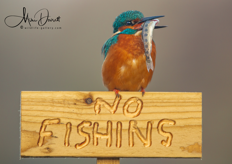 Kingfisher No Fishing Sign