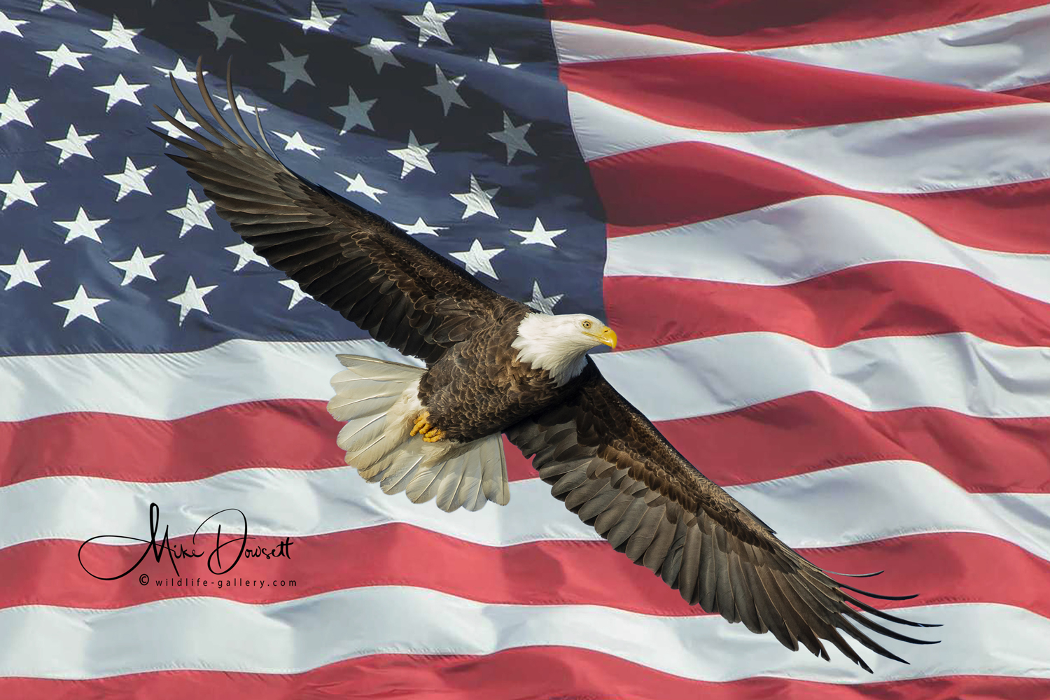 Eagle on Stars and Stripes American Flag