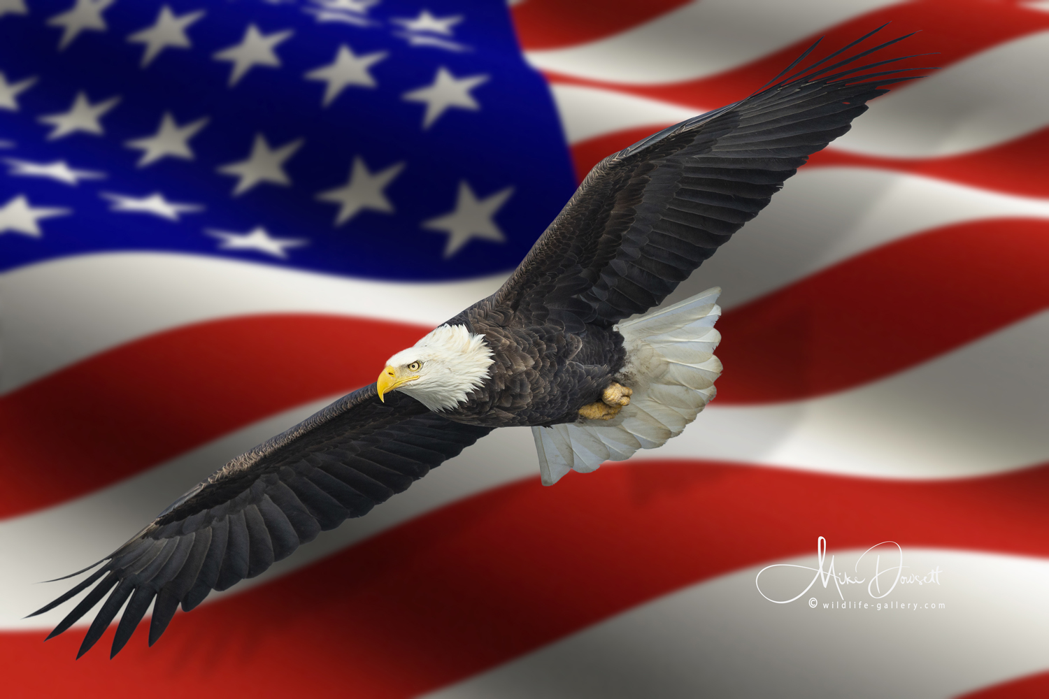 Bald Eagle Stars and Stripes USA Flag