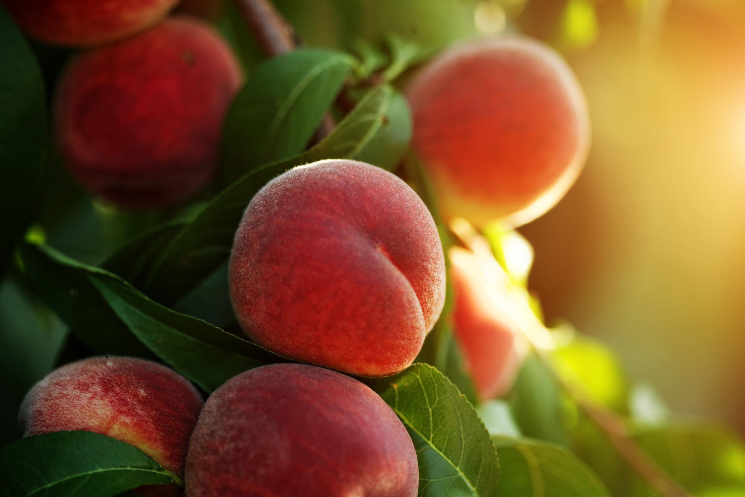 peach-fruits-464513115_5616x3744.jpeg