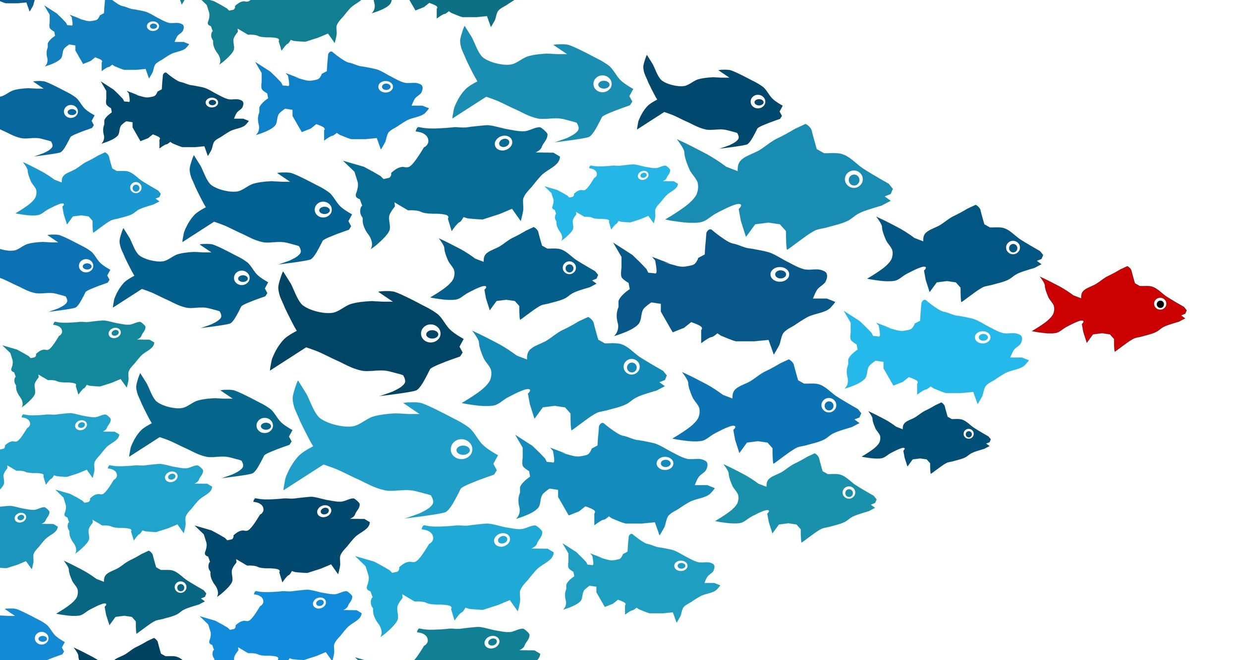 Blue fish following an orange fish who is leading the pack, or school of fish