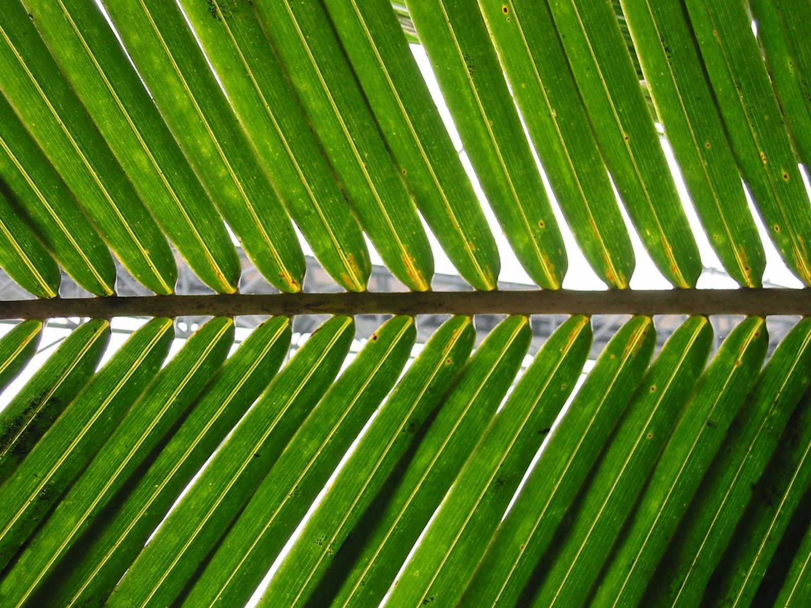 close-up of a palm branch, a metaphor for Palm Sunday, where Jesus rode into Jerusalem.