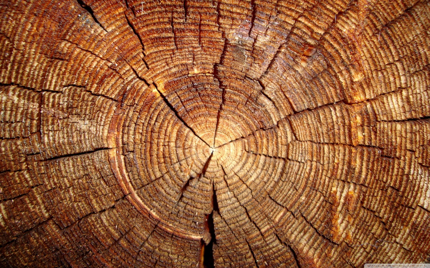 fresh-cut wood on its side so you can see the tree rings, or age rings, complete with cracks and saw marks.