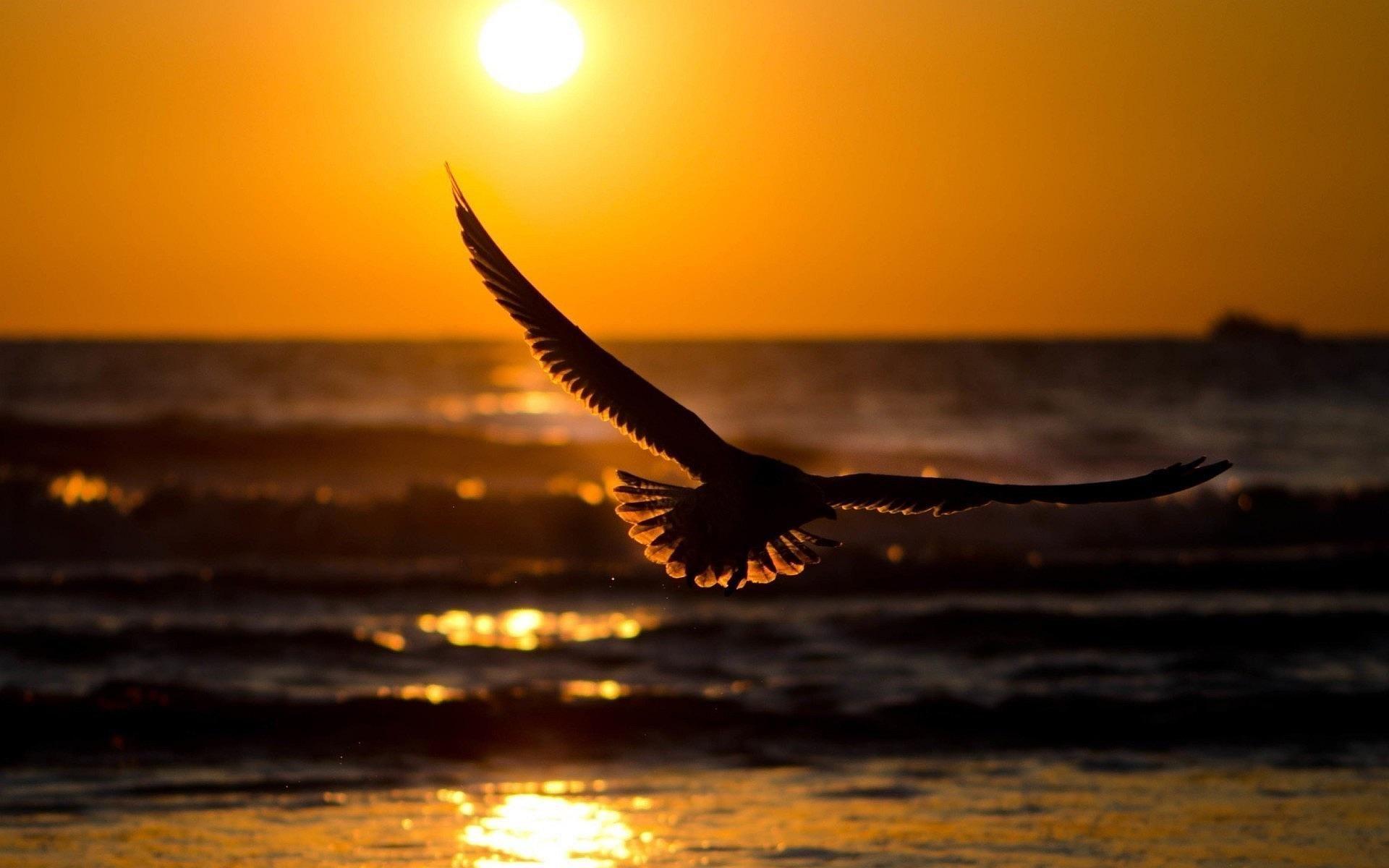 bird-flying-sunset.jpg