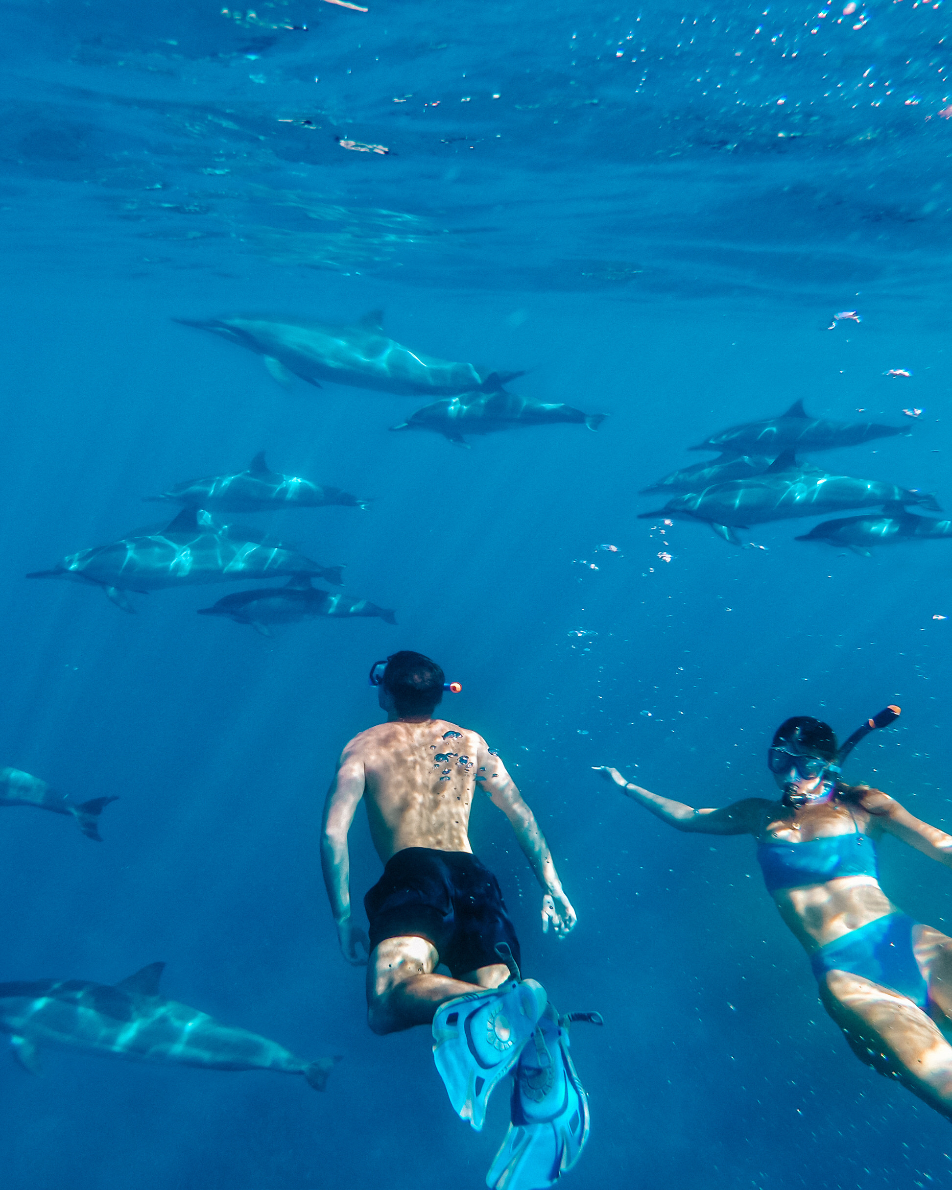 what to do on the big island of hawaii swim with dolphins captain cooks