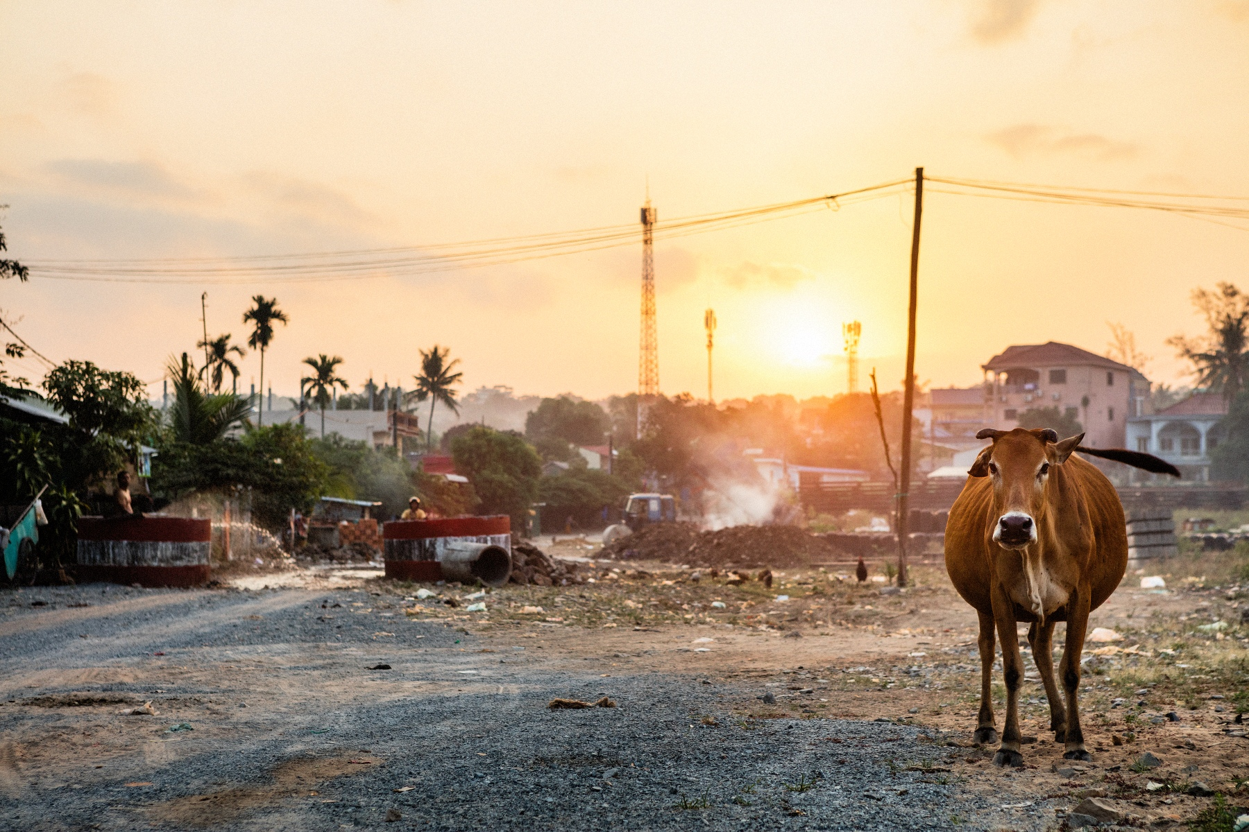 Just outside the  railway station in Sihanoukville  in the sunrise together with a cow.