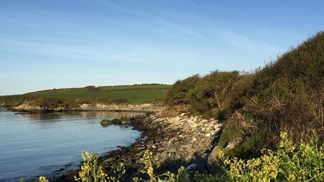 Another super start to the day in Crewe Bay, with a touch of frost in May. . . . . . #coastalliving #colliesofinstagram #morningmeditation #morningwalk #morningwalkies #earlystart #earlybird #dawnchorus #seashore #westcork #schull #crewebay #wildatlanticway