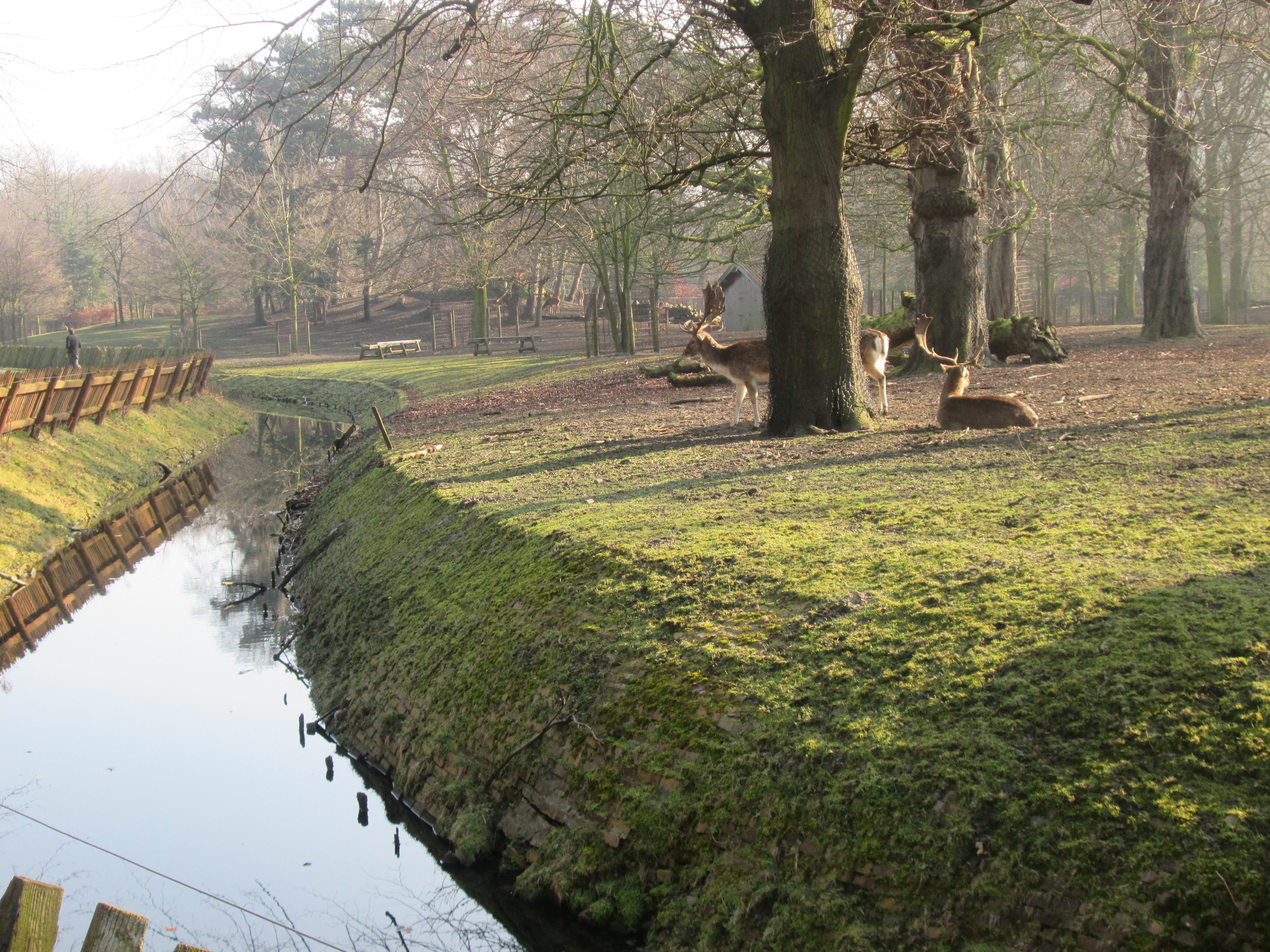 Deer in the Koekamp in Den Haag