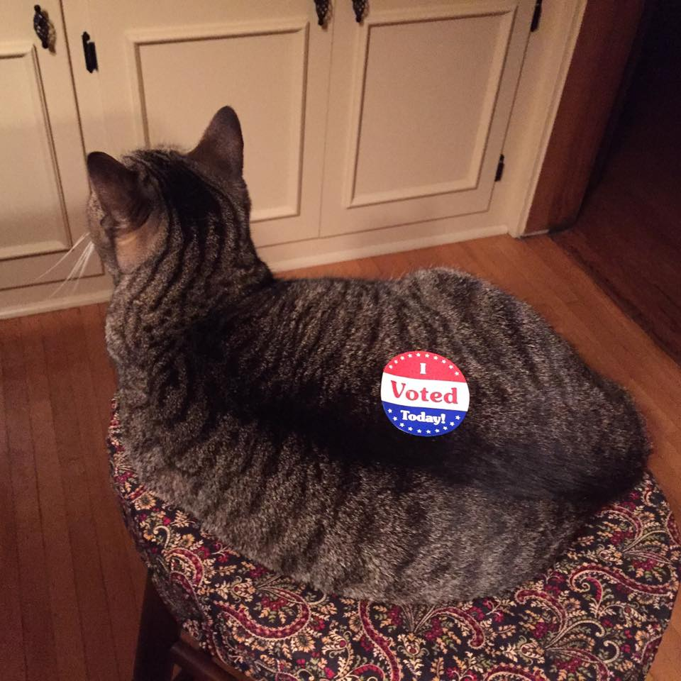 Fur sure, Maggie wants you to vote!