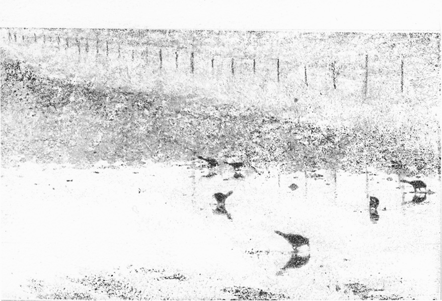 birds in puddle.jpg