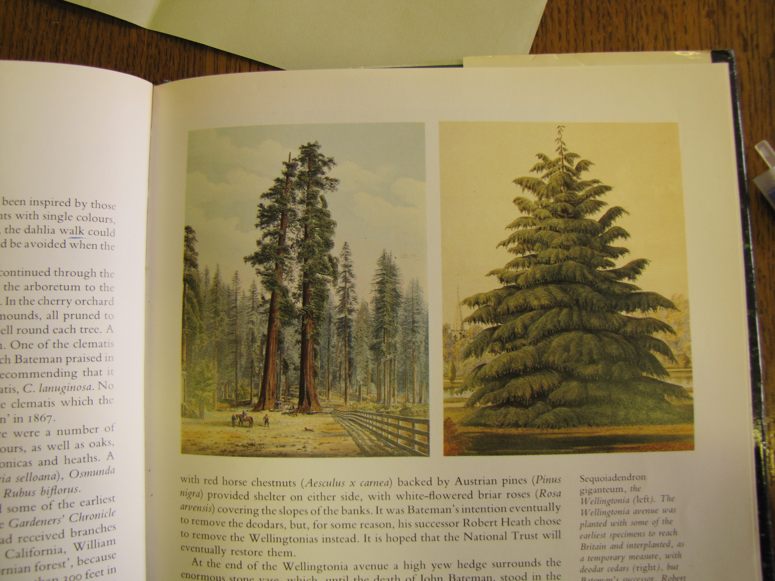 Sequoia: researching in the Biddulph Grange archives