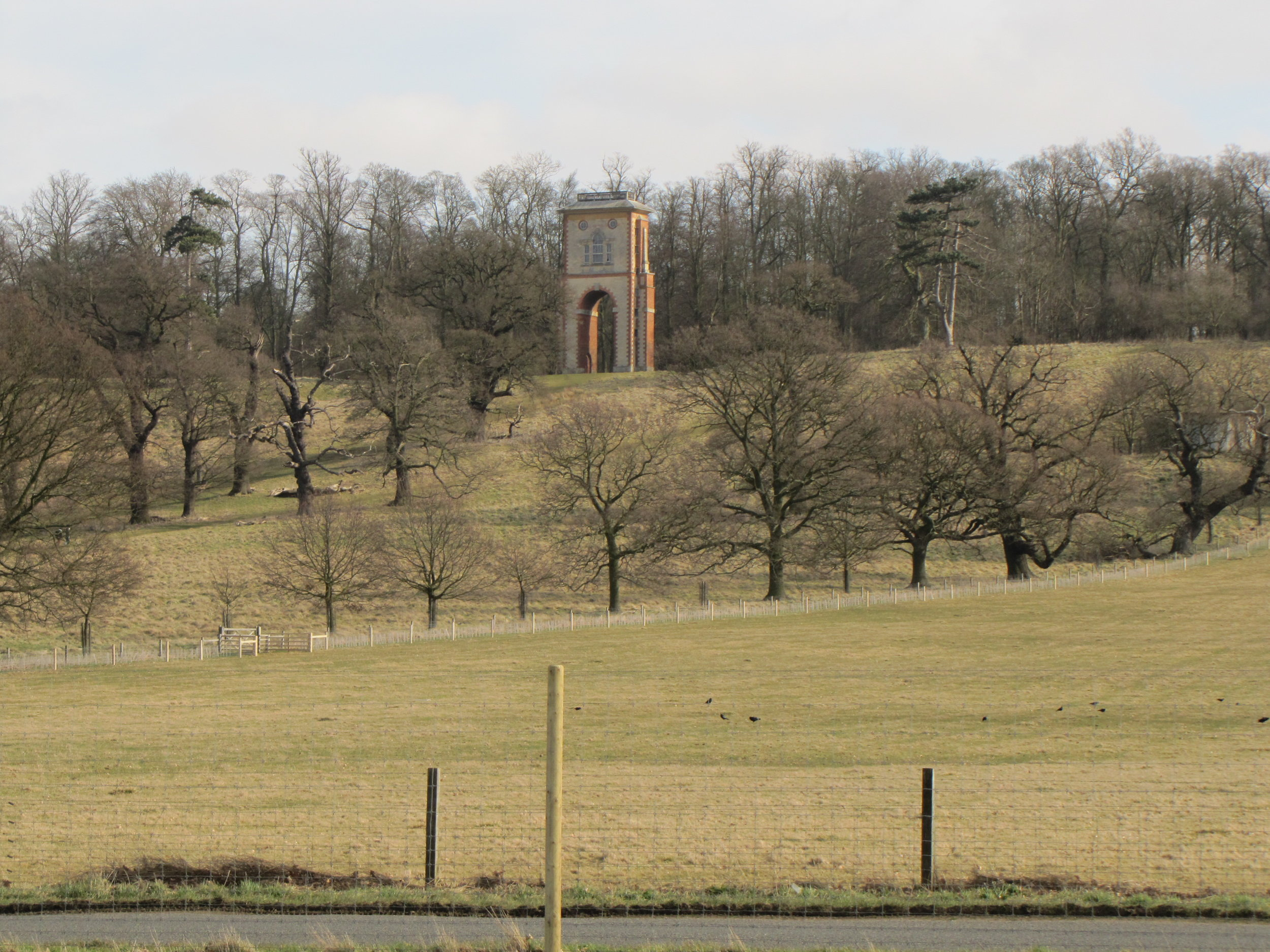 Bellmount tower, rising over the park