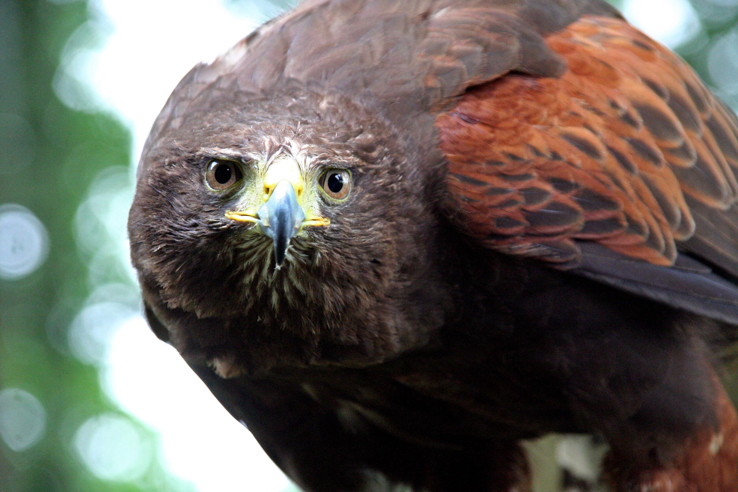 IMG_6298-e-falcon.jpg