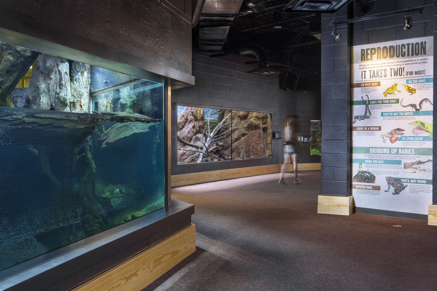 Zoo Atlanta - Reptile House // Client: Winter Construction & Drill Construction