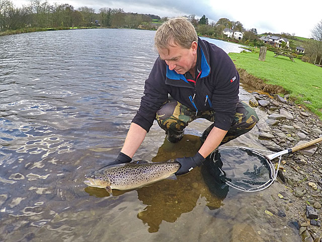 Fred stocks a new tagged fish into Anchor Lake, Exe Valley Fishery, November 2015
