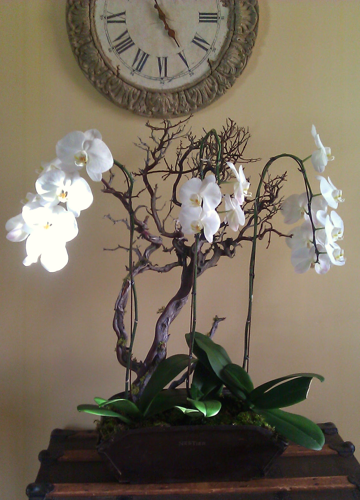 orchids w clock.jpg