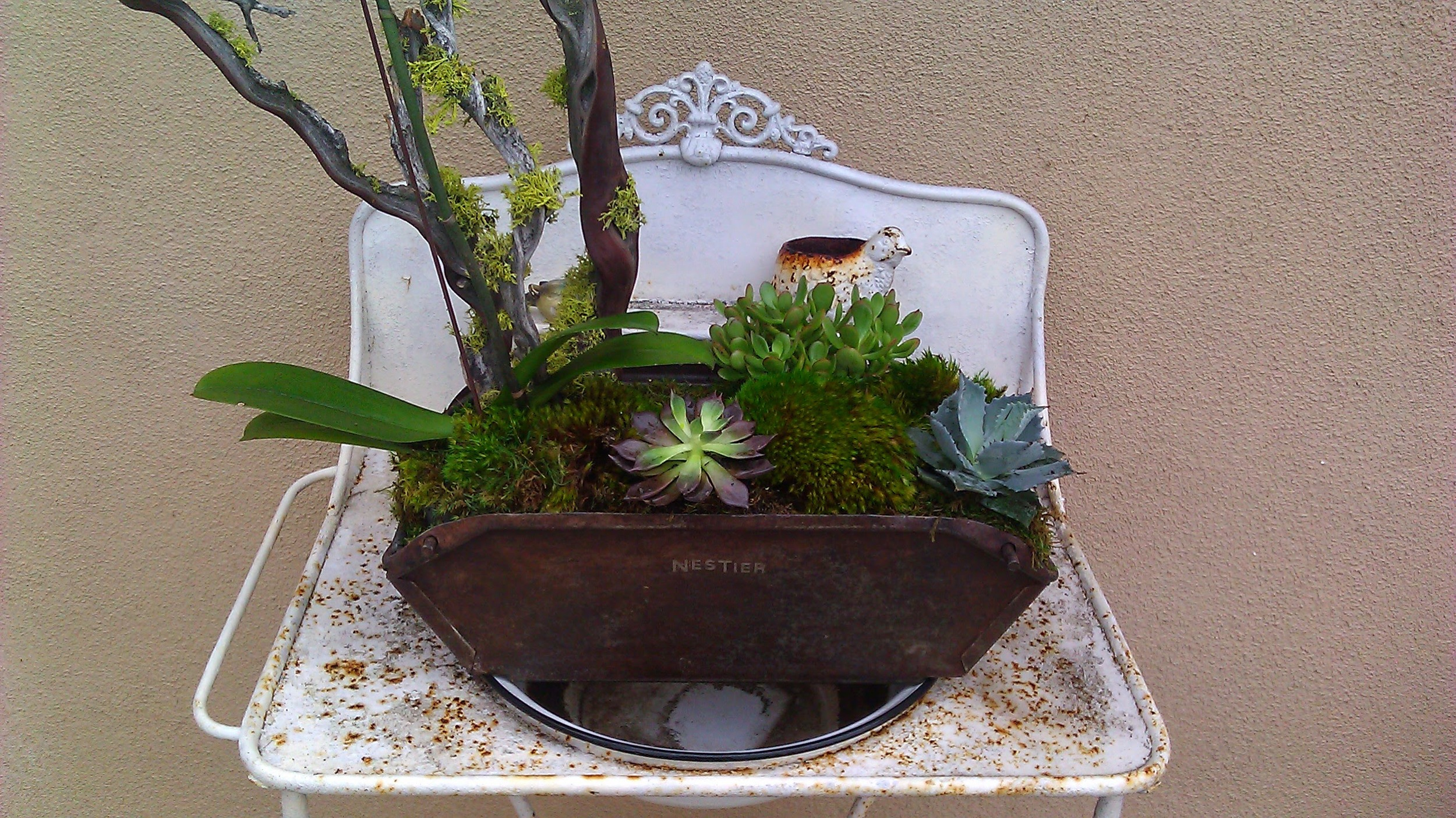 succulents in tin.jpg