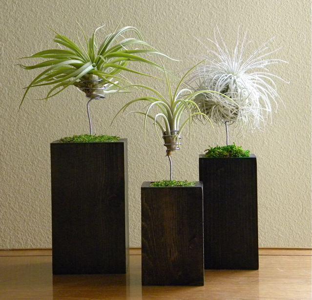 molded container trio.jpg