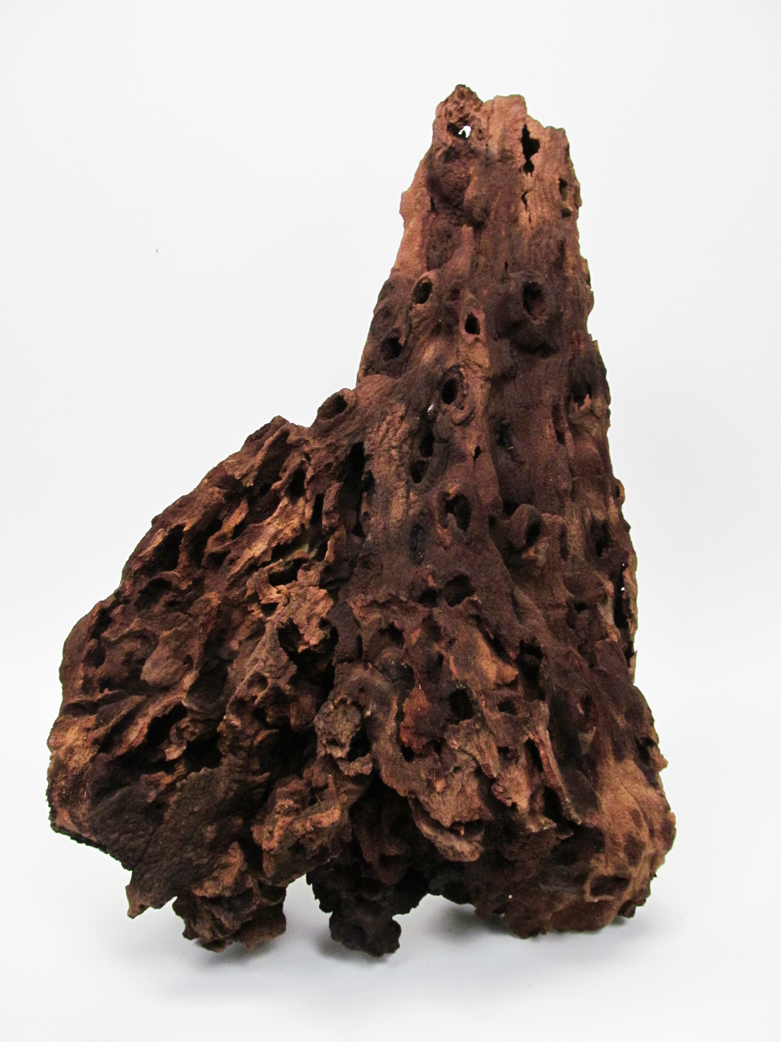 AfricanRoot.png