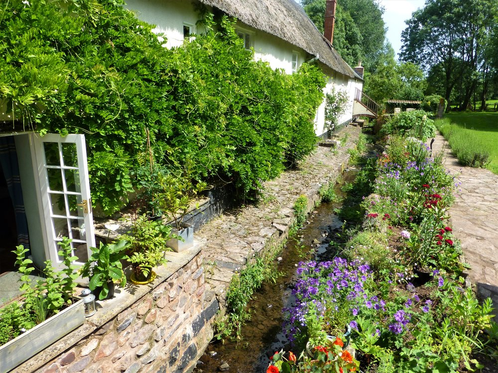 The 'leat' at Mill House, bursting with life and color.