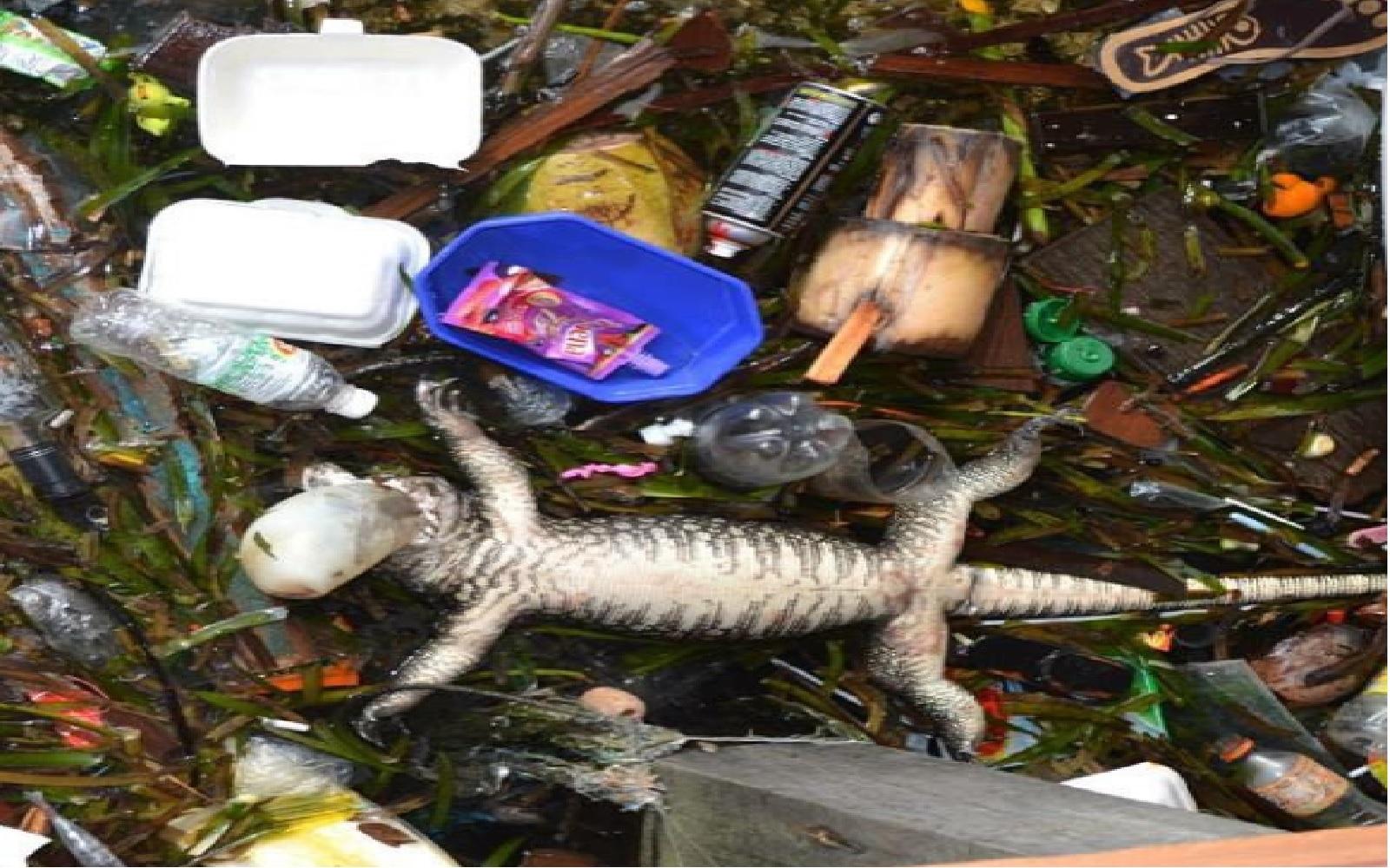 scuba-trashed-beach-2.jpg