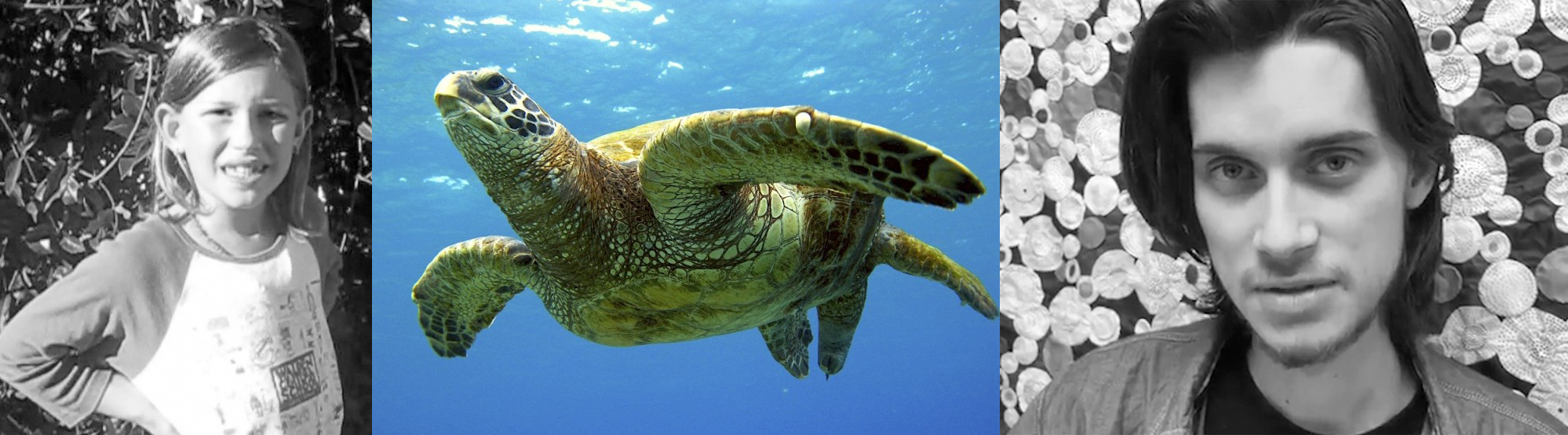 SAVE SEA TURTLES    LEARN MORE