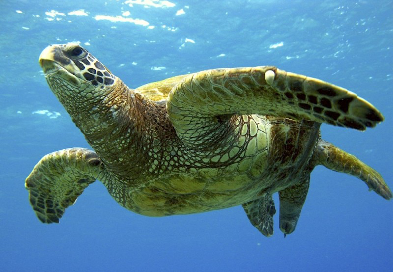 SAVE SEA TURTLES     TAKE THE PLEDGE